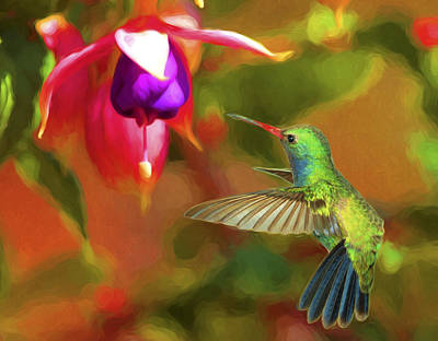 Birds Photograph - Broad-billed Hummingbird And Fuscia by Gregory Scott