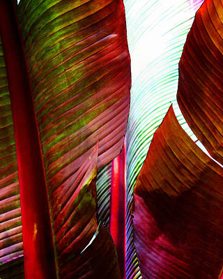 Photograph - Broad Leaves by Timothy Bulone