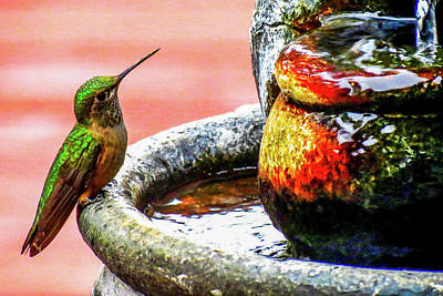 Photograph - Broad-tailed Hummingbird At Water Fountain by Marilyn Burton