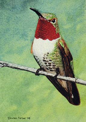 Broad-tailed Hummingbird Art Print by Sharon Farber
