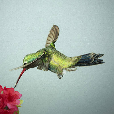 Digital Art - Broadbill Hummingbird With Digital Painting Effect by Gregory Scott