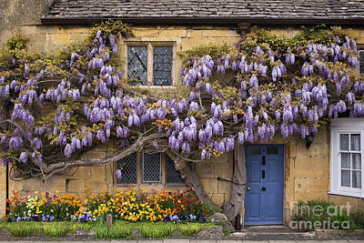 Floribunda Photograph - Broadway Wisteria by Tim Gainey