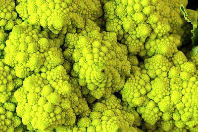 Broccoli Romanesco Close Up Art Print by Teri Virbickis