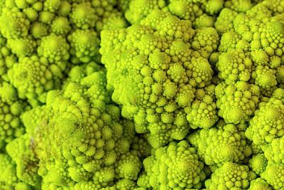 Broccoli Romanesco Art Print by Teri Virbickis