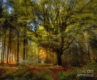 Photograph - Broceliande Forest by Dominique Guillaume