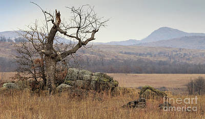 Photograph - Broken And Tree And Rocks by Richard Smith