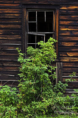 Photograph - Broken Barn Window by Debra Fedchin