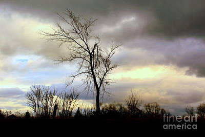 Photograph - Broken by Elfriede Fulda