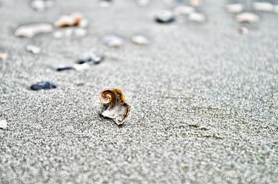 Photograph - Broken Nautilus by Sharon Popek