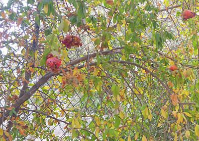 Photograph - Broken Pomegranate by Munir Alawi