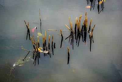 Photograph - Broken Reeds No.2 by Desmond Raymond