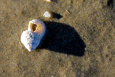 Photograph - Broken Shell by Jean Haynes