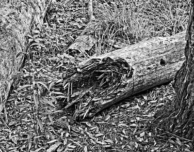 Photograph - Broken Tree by Maggy Marsh