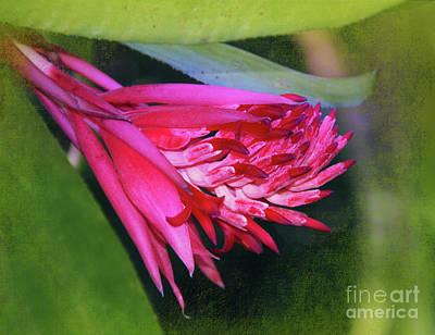 Photograph - Bromeliad At Burden by Judi Bagwell