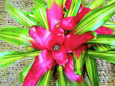 Photograph - Bromeliad Blossoms by Merton Allen