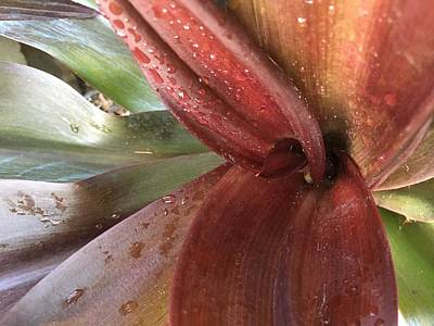 Photograph - Bromeliad Heart by Kay Gilley