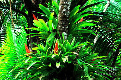 Epiphytic. Island Rainforest Vegetation Photograph - Bromeliads El Yunque National Forest by Thomas R Fletcher