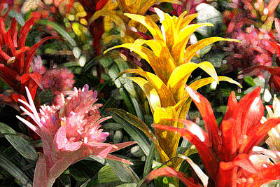 Digital Art - Bromeliads by Steven Sparks
