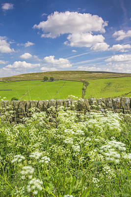 Cow Parsley Wall Art - Photograph - Bronte Country by David Taylor