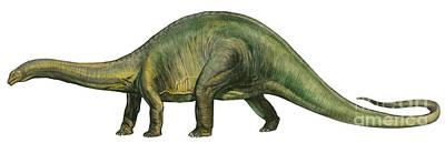 Brontosaurus, A Prehistoric Era Art Print by Sergey Krasovskiy
