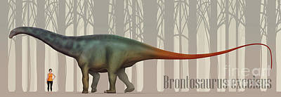 Brontosaurus Excelsus Size Compatison Art Print by Christian Masnaghetti