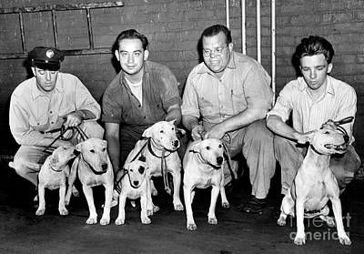 Bronx Aspca Shelter Workers With Dogs That Attacked A Police Officer. 1947 Art Print by Barney Stein