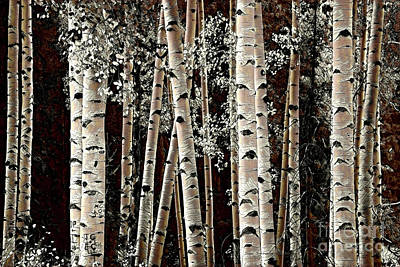 Photograph - Bronze Aspen Trunks by John Stephens