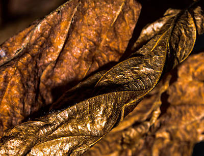 Bronze Leaves Art Print