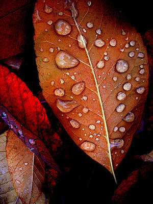 Rainy Day Photograph - Bronzed Leaf by The Forests Edge Photography - Diane Sandoval