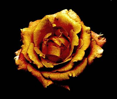 Photograph - Bronzed Rose by Angela Davies