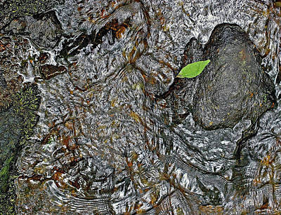Photograph - Brook Bottom by Frank Winters