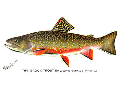 Brook Trout Painting - Brook Trout by Sherman Foote Denton