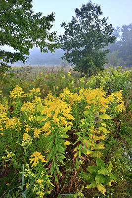 Photograph - Brookdale Prairie Goldenrod by Ray Mathis
