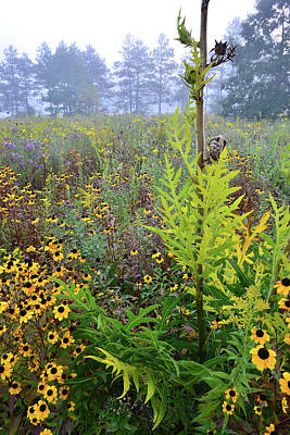 Photograph - Brookdale Wildflower Garden by Ray Mathis
