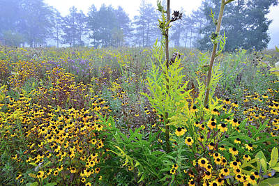 Photograph - Brookdale Wildflower Prairie by Ray Mathis