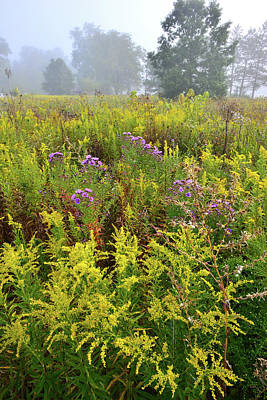 Photograph - Brookdale Wildflowers In Morning Fog by Ray Mathis