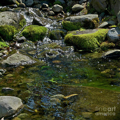 Brook Trout Image Photograph - Brookie Pool by Skip Willits