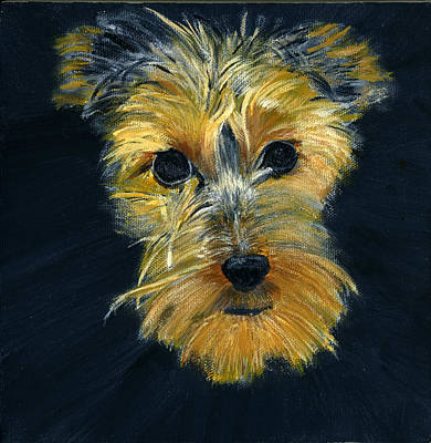Painting - Brookie The Yorky by Sara Stevenson