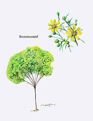 Painting - Broomweed - Xanthocephulum by Michael Earney