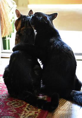 Photograph - Brotherly Cat Love by Rose De Dan