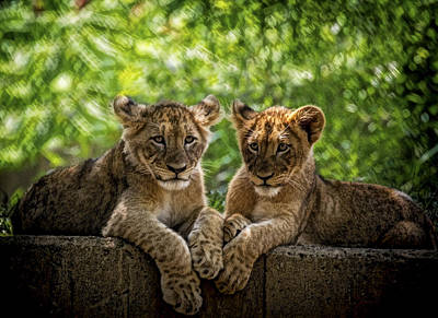 Photograph - Brothers Chillin by Cheri McEachin