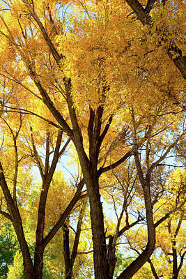 Photograph - Brown And Gold by Frank Madia