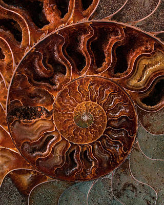Photograph - Brown And Orange Fossil by Jaroslaw Blaminsky