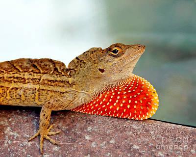 Brown Anole Photograph - Brown Anole Lizard Portrait1 by Sabrina Wheeler