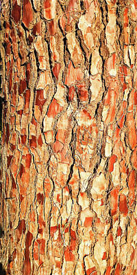 Photograph - Brown Bark by Nareeta Martin