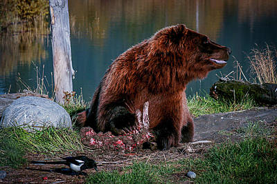 Photograph - Brown Bear And Magpie by Benjamin Dahl