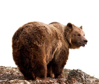 Brown Bear Art Print by Boyan Dimitrov