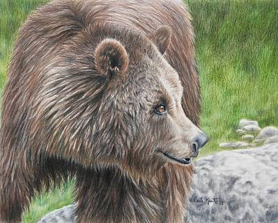 Drawing - Brown Bear by Carla Kurt
