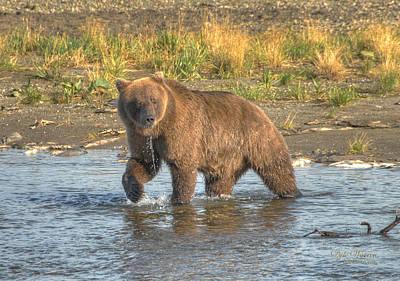 Photograph - Brown Bear Of Katmai by Dyle   Warren