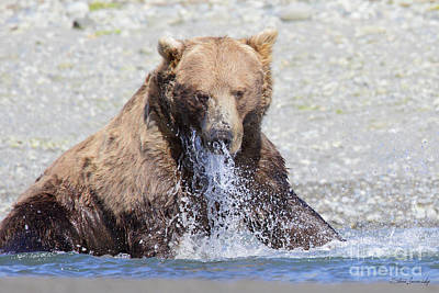 Photograph - Brown Bear by Steve Javorsky